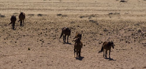CABALLOS SALVAJES DE NAMIBIA03 by you.