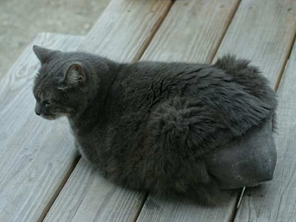 Baldy-Butt