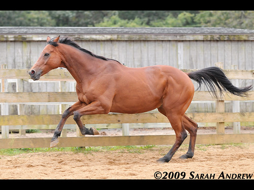 Wizard reminds me that he once was a racehorse