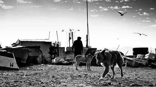 Tumbes, caleta de perros. - Kenkerkutiv - © Todos los derechos reservados.