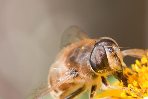 Bee-ish macro