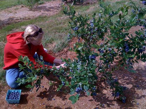 mia picking berries