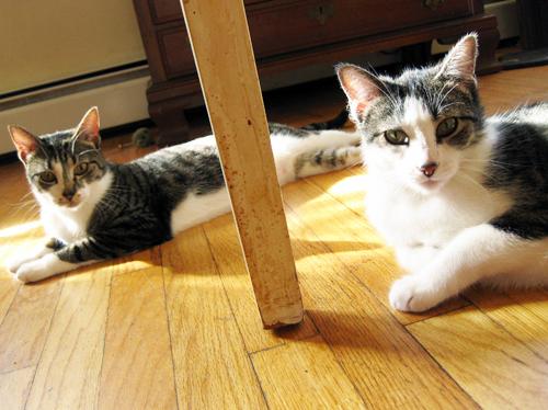 stripeycats (by jesh\)