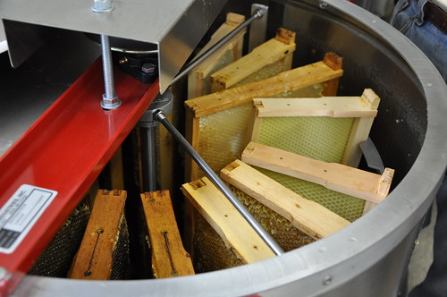 20-frame automatic extractor