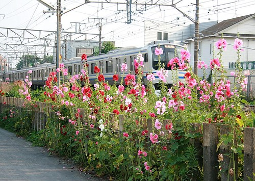 Japans mass transit and beautiful flowers.