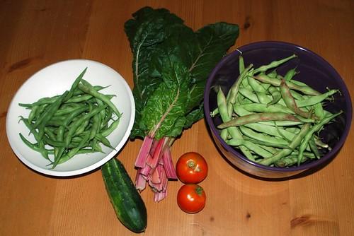 Today's Harvest 062609