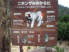 Japanese macaque body chart, Mt. Misen, Miyajima