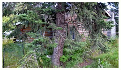 Abandoned cabin, Butte, Alaska.