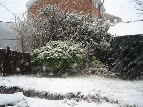 091220 - 2h30 backyard snow 02