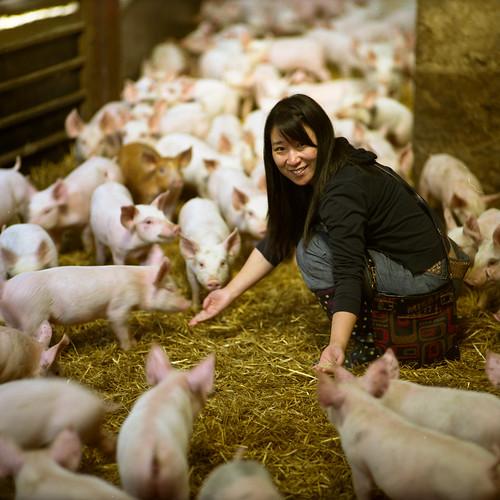 Piggy Ma