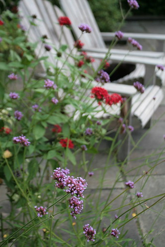 Verbena in front of chairs