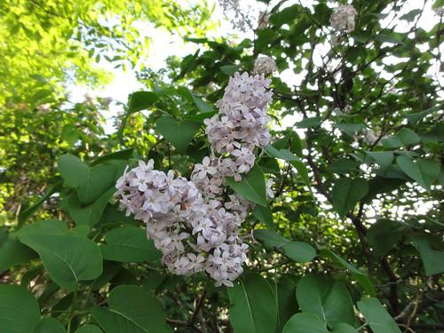 048/365 Blooming bush