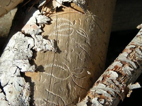 tree marker