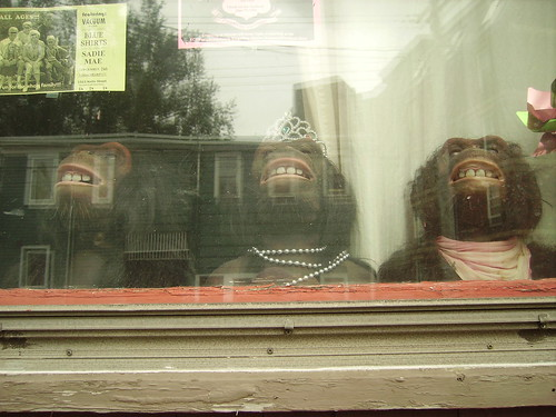 halifax apes in the window