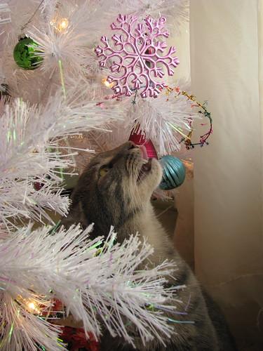 Kitten Inspects the Tree