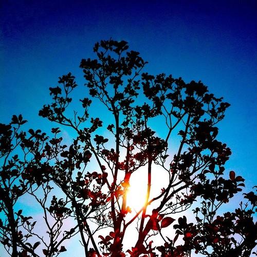 今日も一日、お疲れ様でした。 #sunset