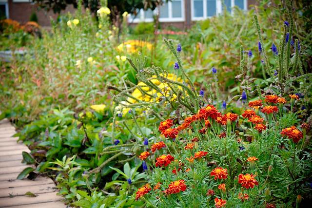 garden (1 of 1)-2