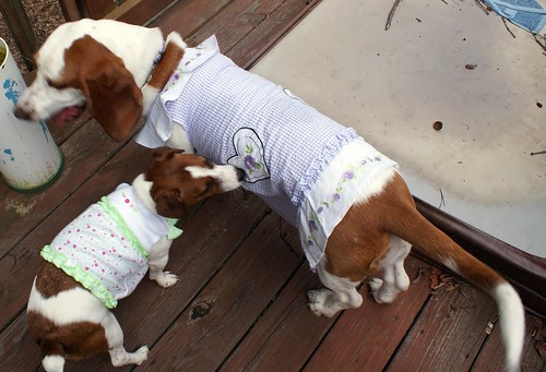 Sissy:  I cant breathe.  Gretchen:  Mine is so big I look like a bulldog...