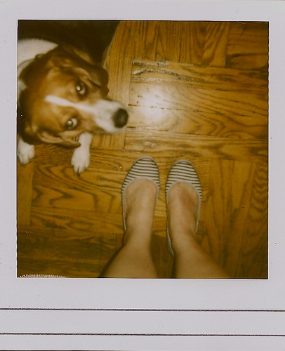 the dog walker {polaroid}
