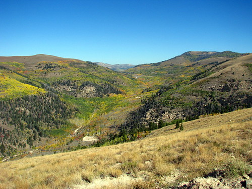 Cottonwood Canyon in Fall Colors
