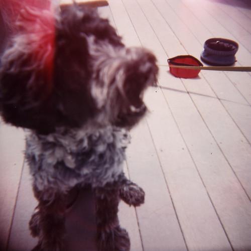 Dog and Items (Holga)
