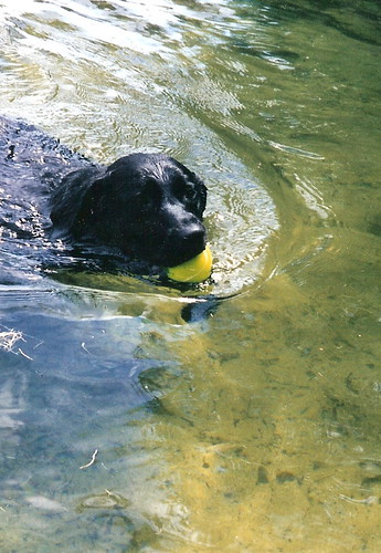 Two of her Favorite things....tennis balls...and swimming.