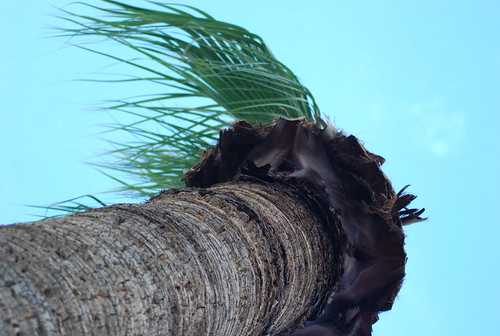 windy palm