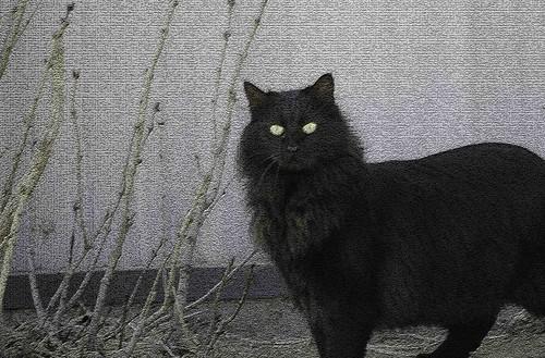 scary barn cat