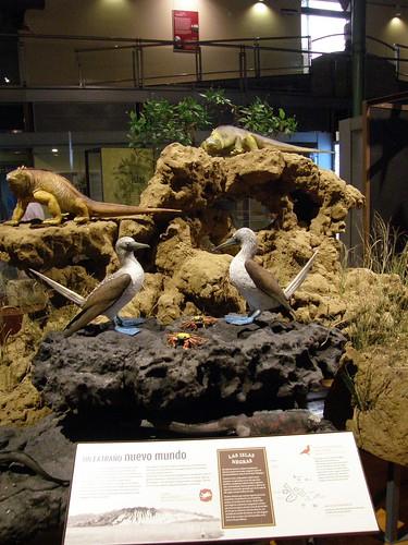Fauna de las Galápagos