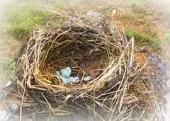 9-6-09 Empty Nest