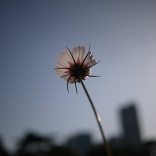 20090920-浜離宮