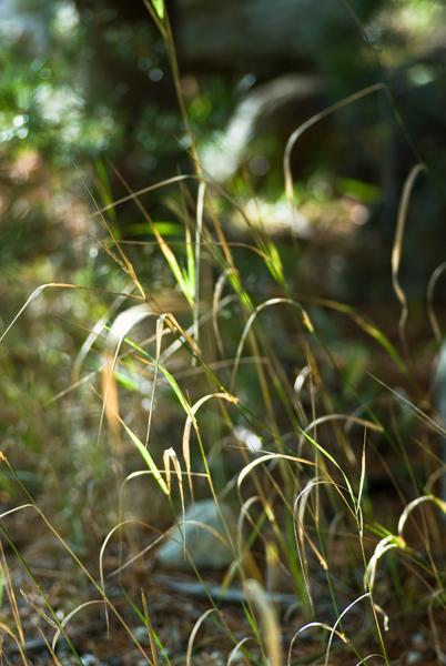 grass and light