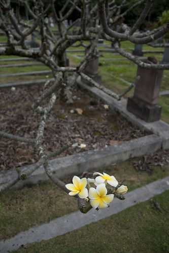 Chinese Cemetery flowers on a dead tree