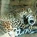 Woodland Park Zoo Seattle 011