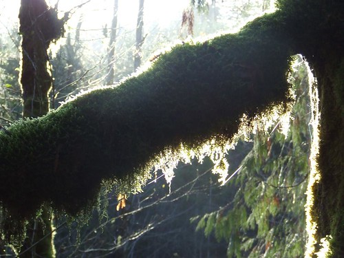 Flare on Moss