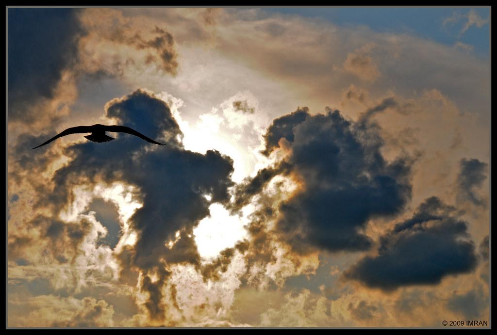 Fire Bird Birth From Fiery Sun OR Flying Into A Dark But Bright Future - IMRAN™