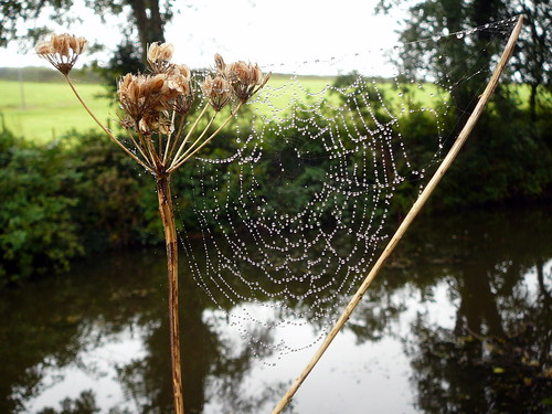 Spider Web by the Canal