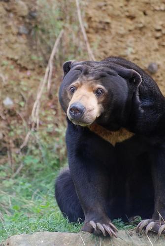 Malaka im Zoo de Trégomeur