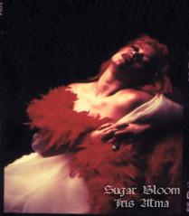 Sugar Bloom Iris Atma * Magdalena en éxtasis