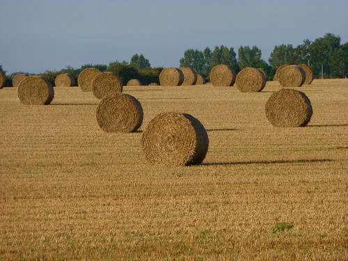 Hay at harvest time