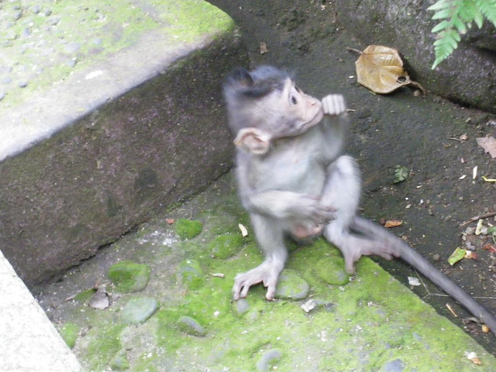 Sacred monkey forest, Bali - IMGP3098