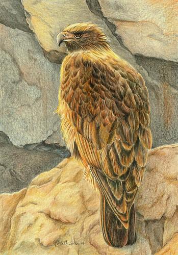 智勝_Golden Eagle