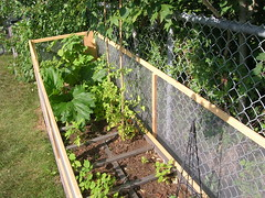 vole proof fence for my garden!