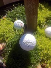 Golf-theme Garden