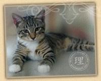 Bacchus Kitten