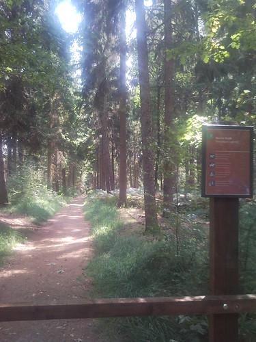 zomerstage bij staatsbosbeheer