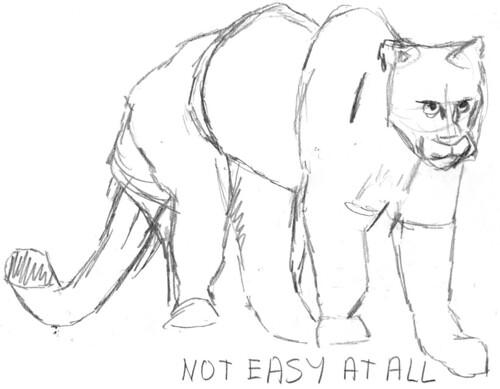Drawing a cougar