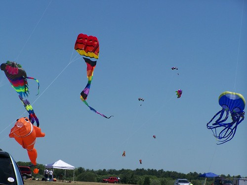 Just some of the kites flying high on Saturday.