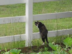 Dorothy surveys the scene