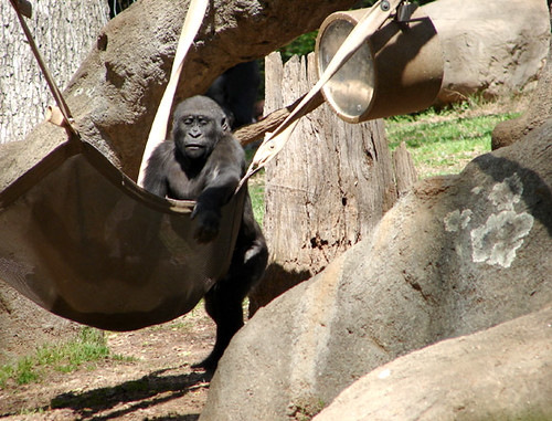 Gorilla5_ECU